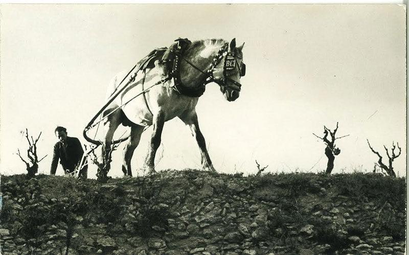 Cavall arant la terra